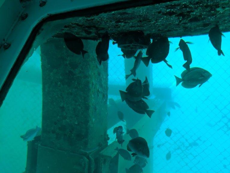 """1992 Semi-Submarine 53' Subsee Explorer """"Nautilus VI"""""""